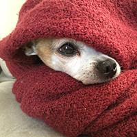 布ナプキンって本当に排卵痛に効くの?